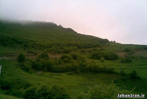 جنگل طبیعی تنباکولو